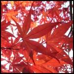 2014年大阪の紅葉の見頃は?オススメスポットやライトアップ情報