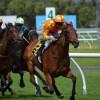 horses-380406_1920-400x270-MM-100